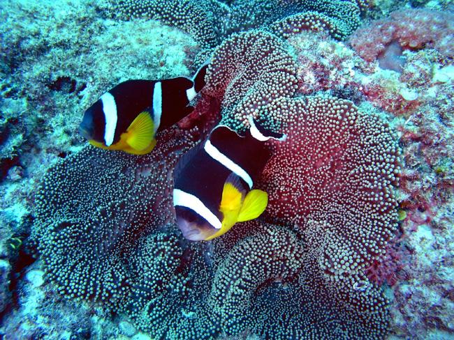 Маврикий - дайвинг